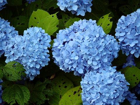 古海集落のお花(その3)♪