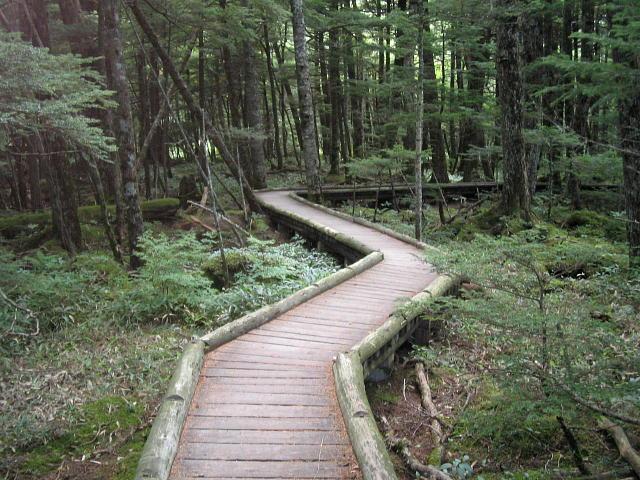 御泉水自然園の木道♪