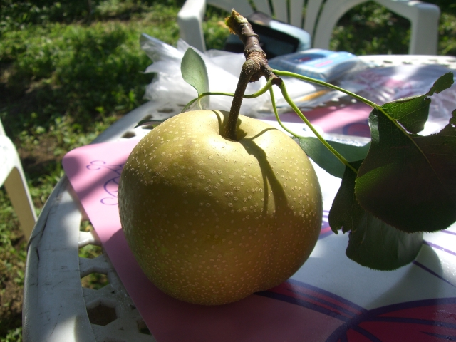 葉っぱのついた可愛い梨たん♪