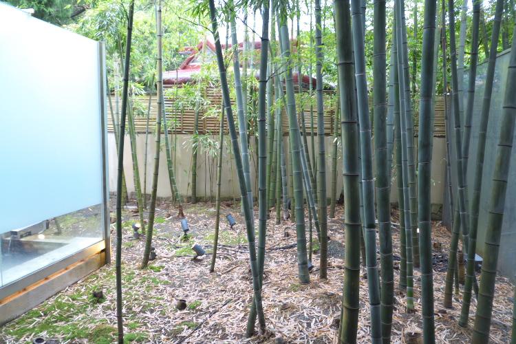 竹林のお庭♪